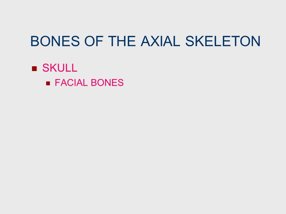 BONES OF THE AXIAL SKELETON SKULL FACIAL BONES