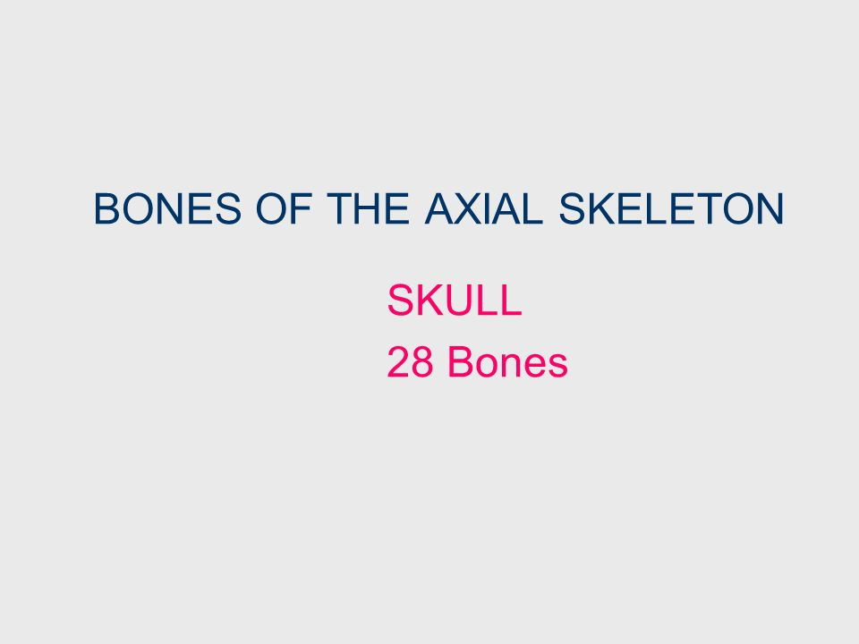 BONES OF THE AXIAL SKELETON SKULL FACIAL BONES Primarily Form the Face