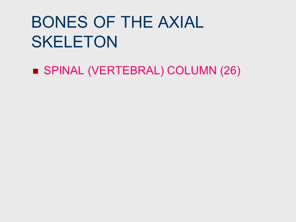 BONES OF THE AXIAL SKELETON SPINAL (VERTEBRAL) COLUMN (26)