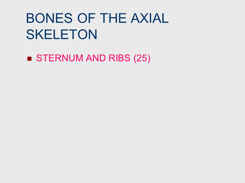 BONES OF THE AXIAL SKELETON STERNUM AND RIBS (25)