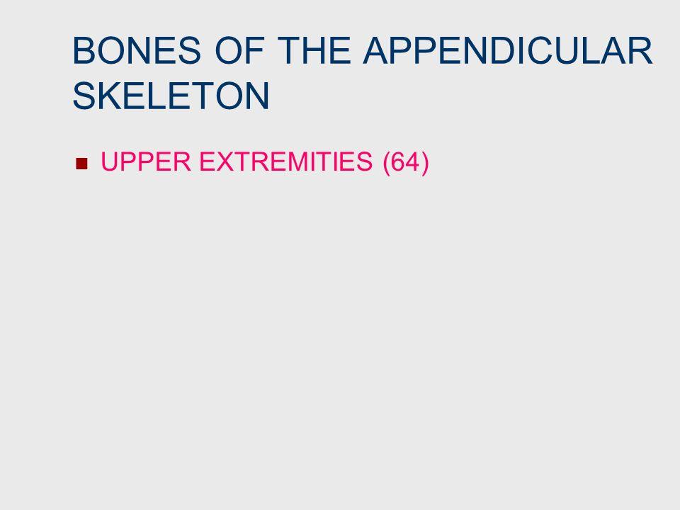BONES OF THE APPENDICULAR SKELETON UPPER EXTREMITIES (64)