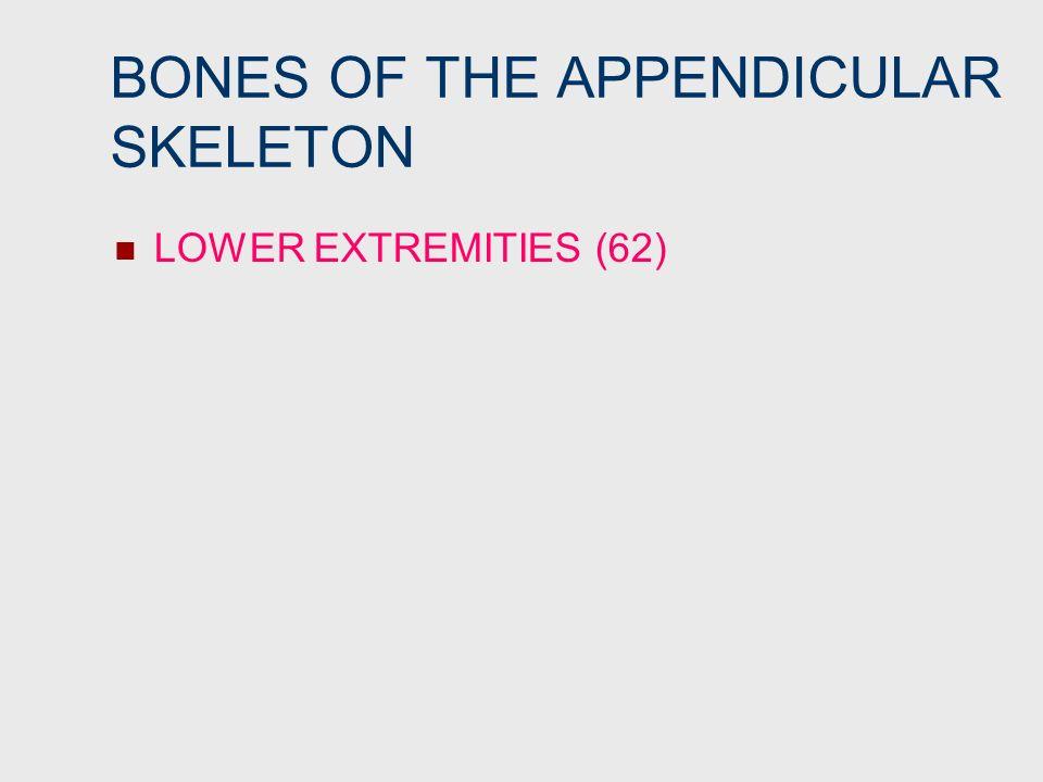 BONES OF THE APPENDICULAR SKELETON LOWER EXTREMITIES (62)