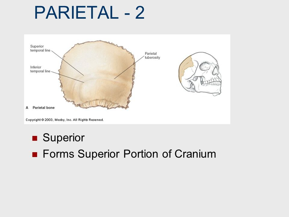 NOTCH V-like Depression in Bone Example: Supraorbital Notch Allows passage of supraorbital vessels & nerves.