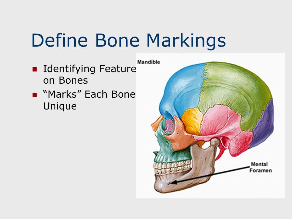 Define Bone Markings Identifying Features on Bones Marks Each Bone as Unique