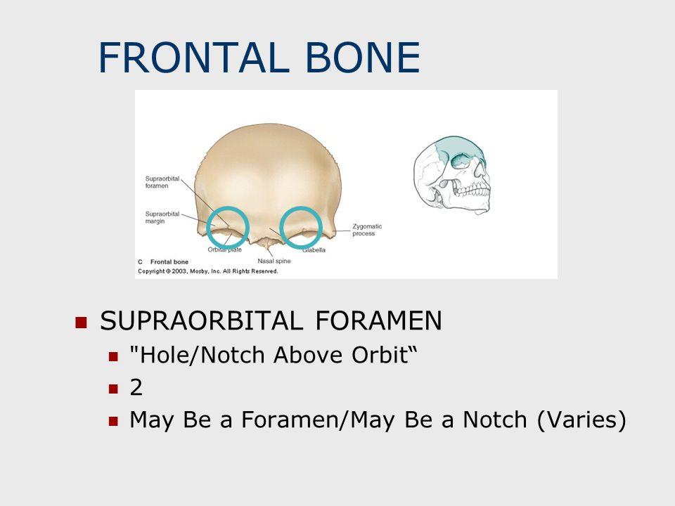 FRONTAL BONE SUPRAORBITAL FORAMEN
