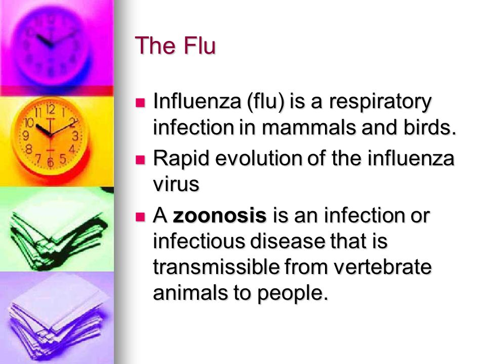 The Flu Influenza (flu) is a respiratory infection in mammals and birds.