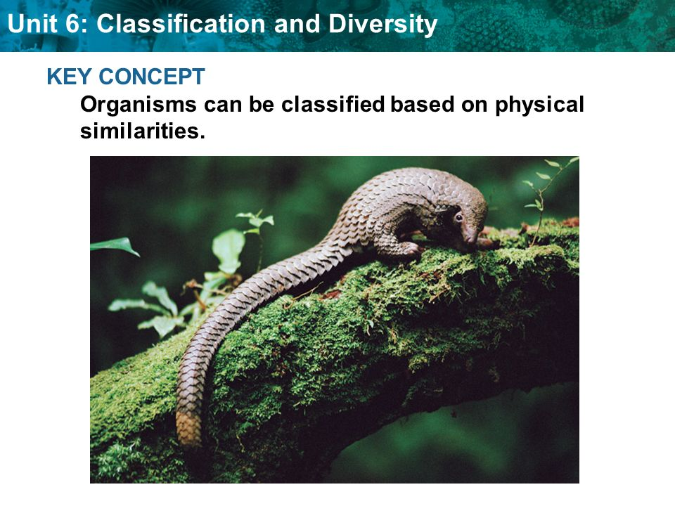 Unit 6: Classification and Diversity Linnaeus developed the scientific naming system still used today.