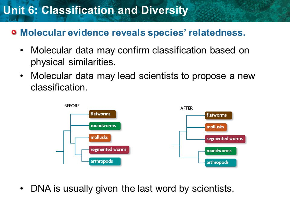 Unit 6: Classification and Diversity KEY CONCEPT Molecular clocks provide clues to evolutionary history.