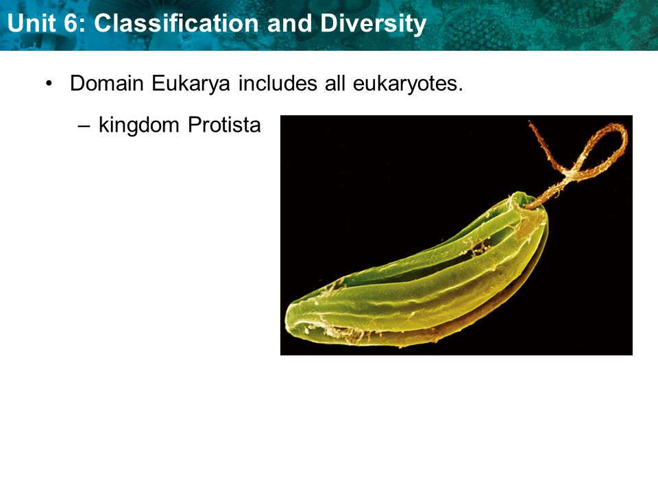 Unit 6: Classification and Diversity Domain Eukarya includes all eukaryotes. –kingdom Protista