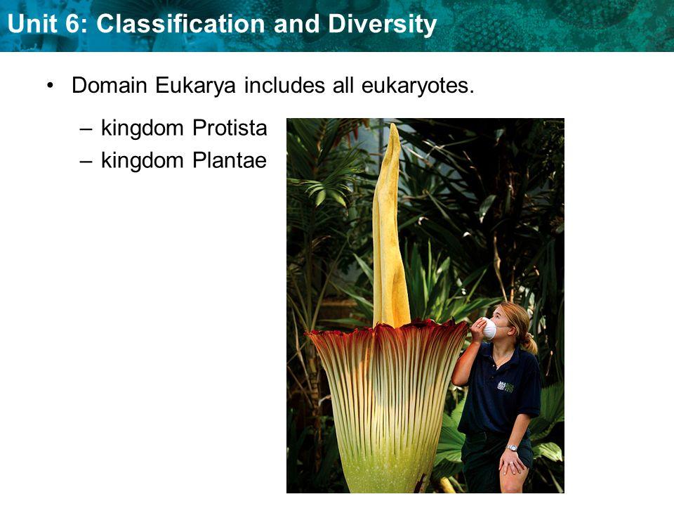 Unit 6: Classification and Diversity Domain Eukarya includes all eukaryotes. –kingdom Protista –kingdom Plantae