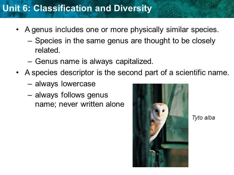 Unit 6: Classification and Diversity Scientific names help scientists to communicate.