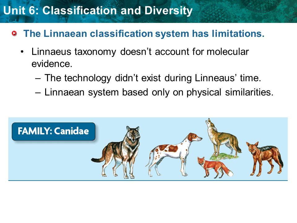 Unit 6: Classification and Diversity Physical similarities are not always the result of close relationships.