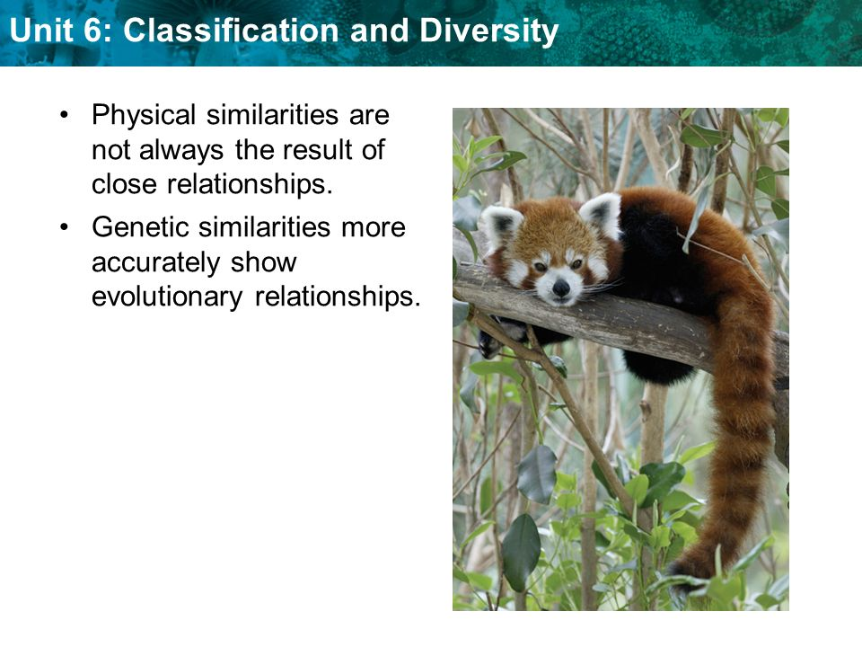 Unit 6: Classification and Diversity KEY CONCEPT Modern classification is based on evolutionary relationships.