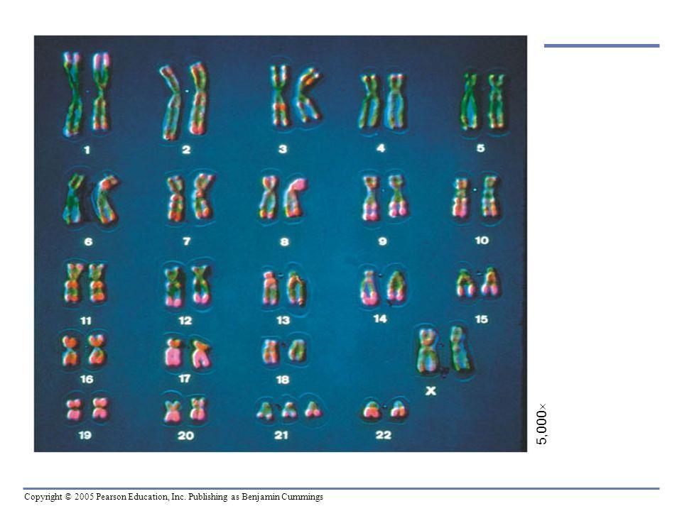 Copyright © 2005 Pearson Education, Inc. Publishing as Benjamin Cummings 5,000