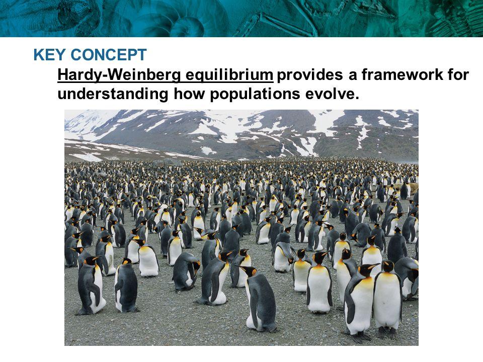 KEY CONCEPT Hardy-Weinberg equilibrium provides a framework for understanding how populations evolve.