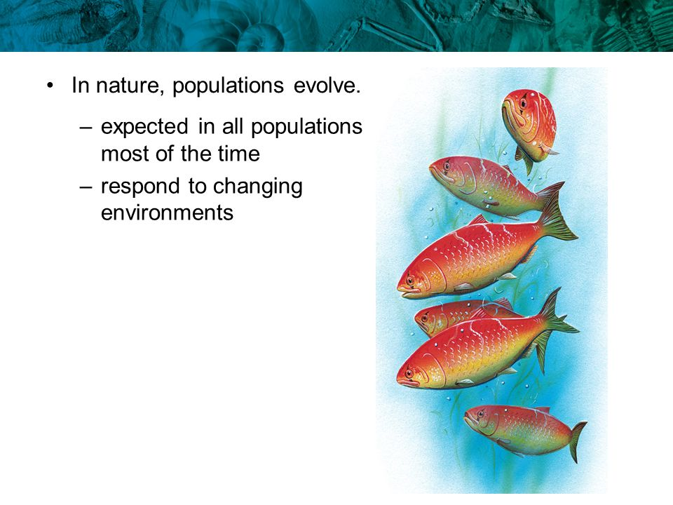 In nature, populations evolve. –expected in all populations most of the time –respond to changing environments
