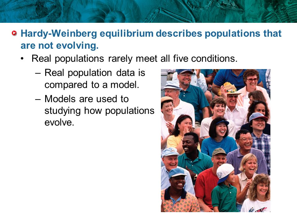 Hardy-Weinberg equilibrium describes populations that are not evolving. Real populations rarely meet all five conditions. –Real population data is com
