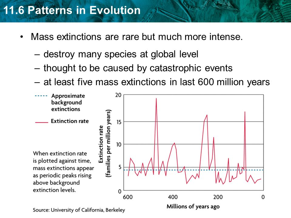 11.6 Patterns in Evolution Mass extinctions are rare but much more intense. –destroy many species at global level –thought to be caused by catastrophi