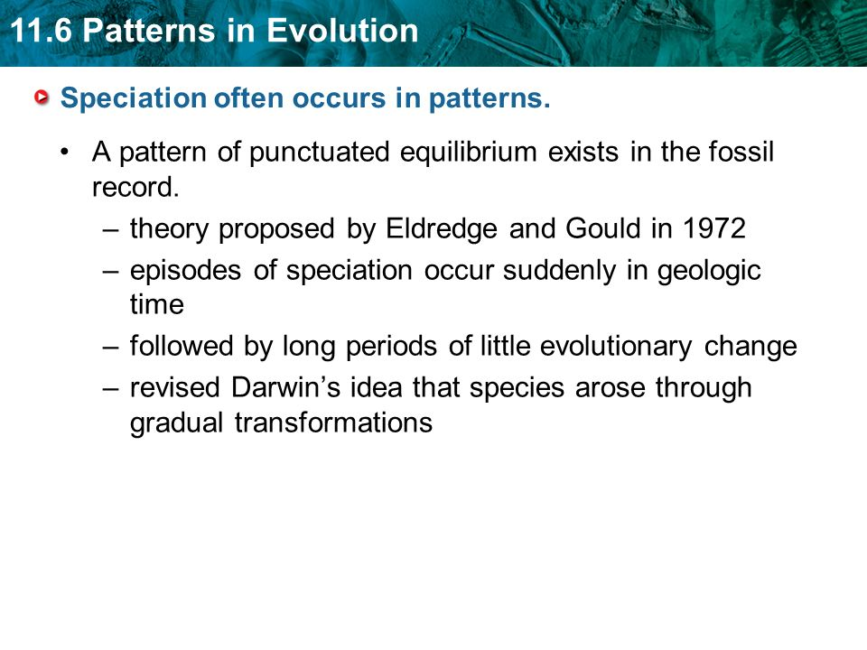11.6 Patterns in Evolution Speciation often occurs in patterns. A pattern of punctuated equilibrium exists in the fossil record. –theory proposed by E