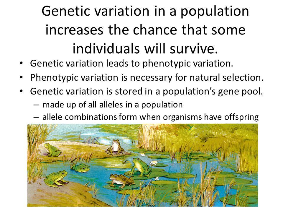 Allele frequencies measure genetic variation.
