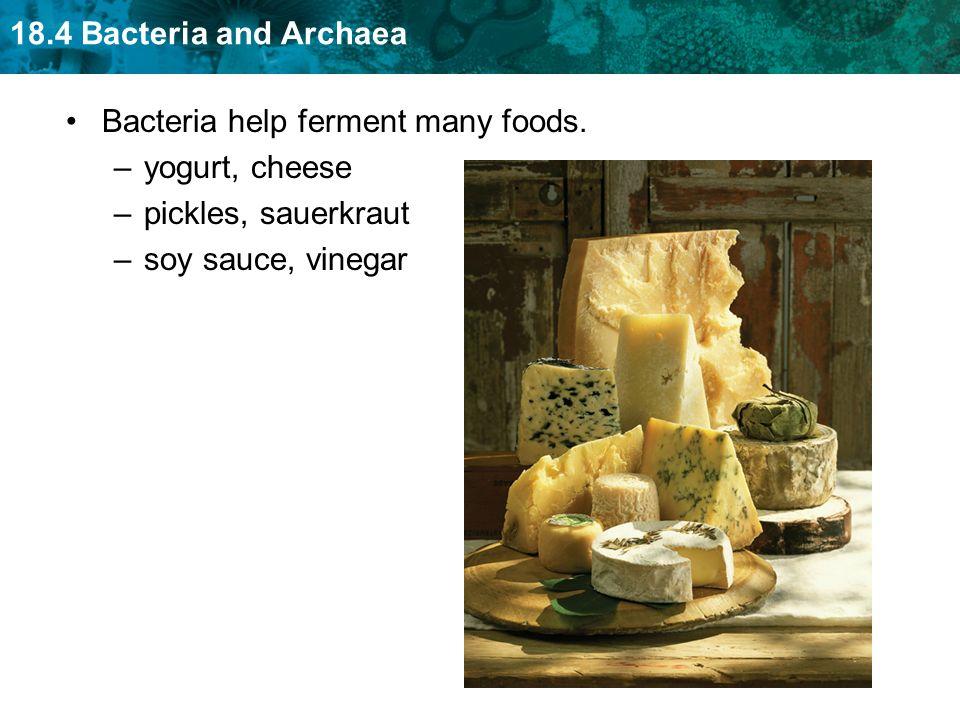 18.4 Bacteria and Archaea Bacteria help ferment many foods. –yogurt, cheese –pickles, sauerkraut –soy sauce, vinegar