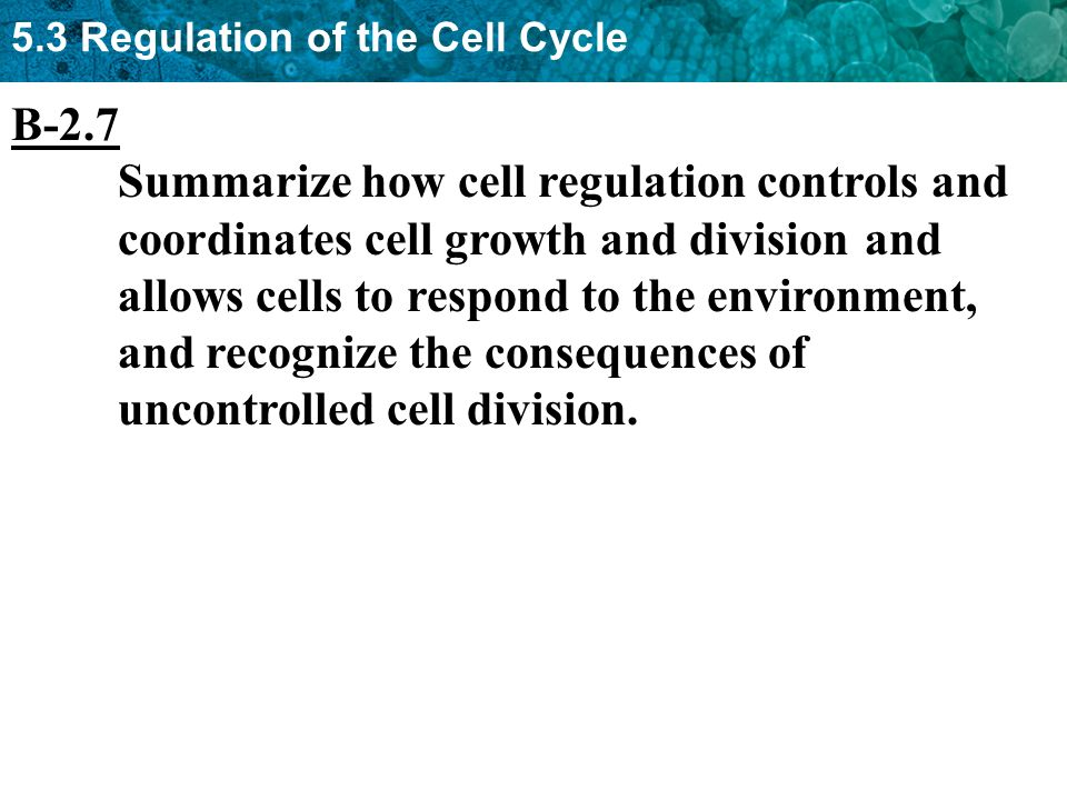 5.3 Regulation of the Cell Cycle B-2.7 Summarize how cell regulation controls and coordinates cell growth and division and allows cells to respond to