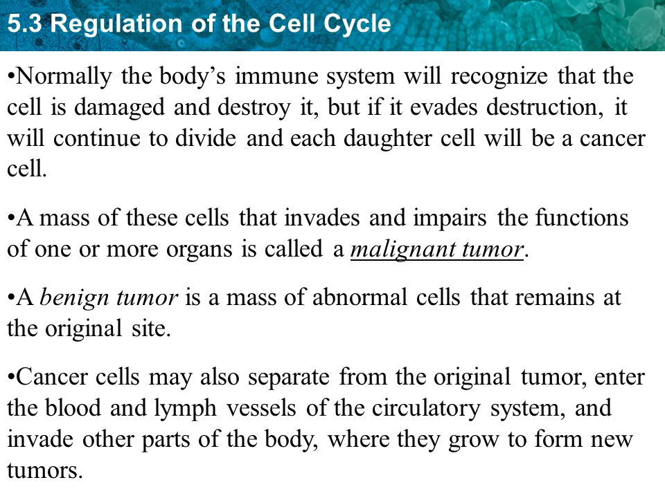 5.3 Regulation of the Cell Cycle Cancer cells do not carry out necessary functions.
