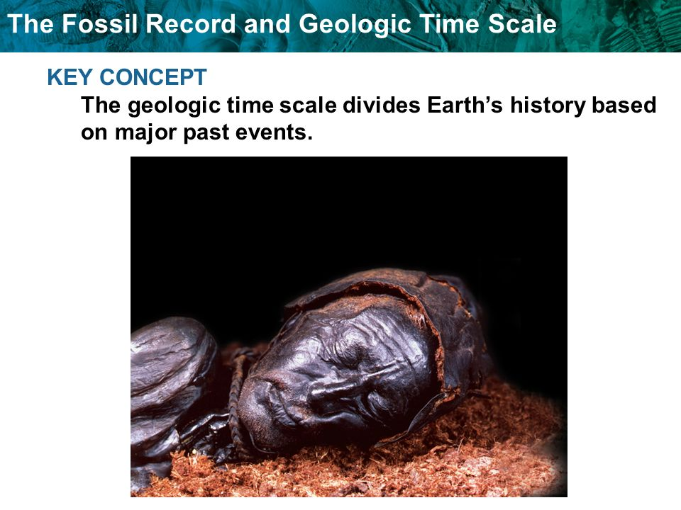The Fossil Record and Geologic Time Scale KEY CONCEPT The geologic time scale divides Earths history based on major past events.