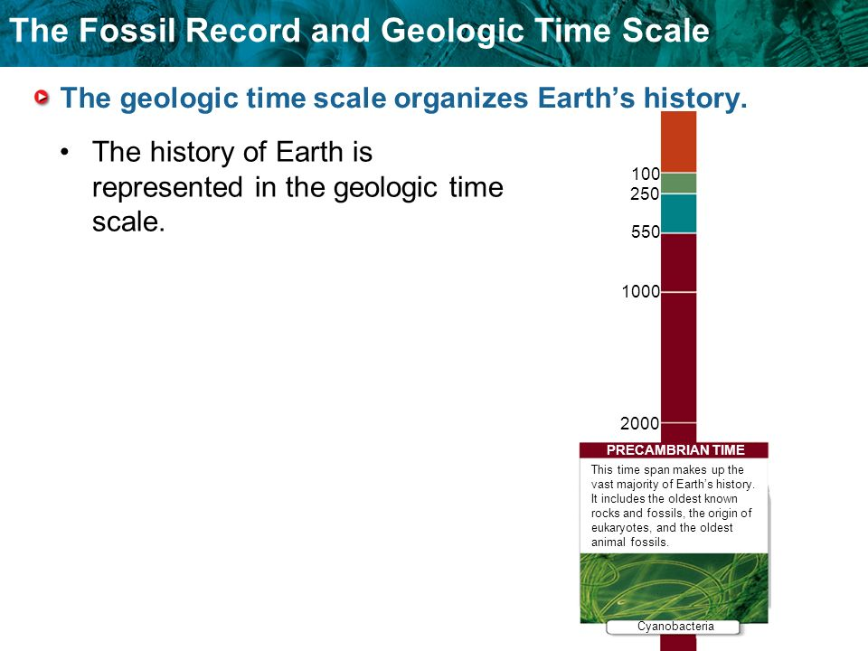 The Fossil Record and Geologic Time Scale The geologic time scale organizes Earths history. The history of Earth is represented in the geologic time s