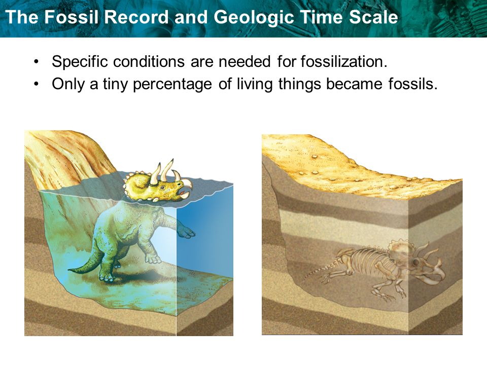 The Fossil Record and Geologic Time Scale Specific conditions are needed for fossilization. Only a tiny percentage of living things became fossils.