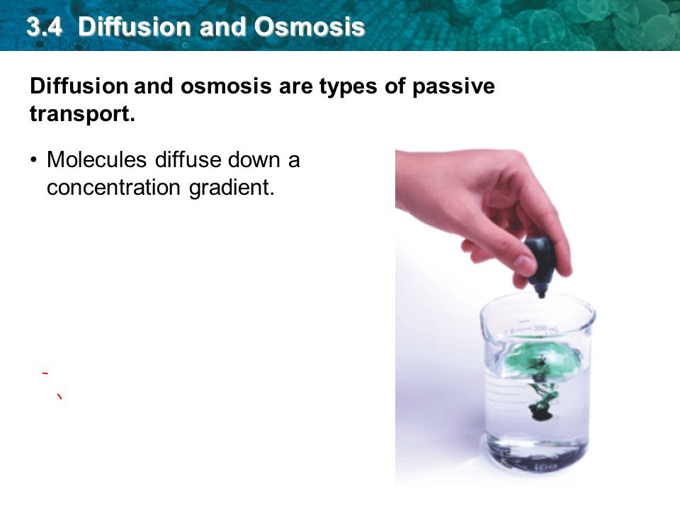 Diffusion and osmosis are types of passive transport. Molecules diffuse down a concentration gradient. 3.4 Diffusion and Osmosis