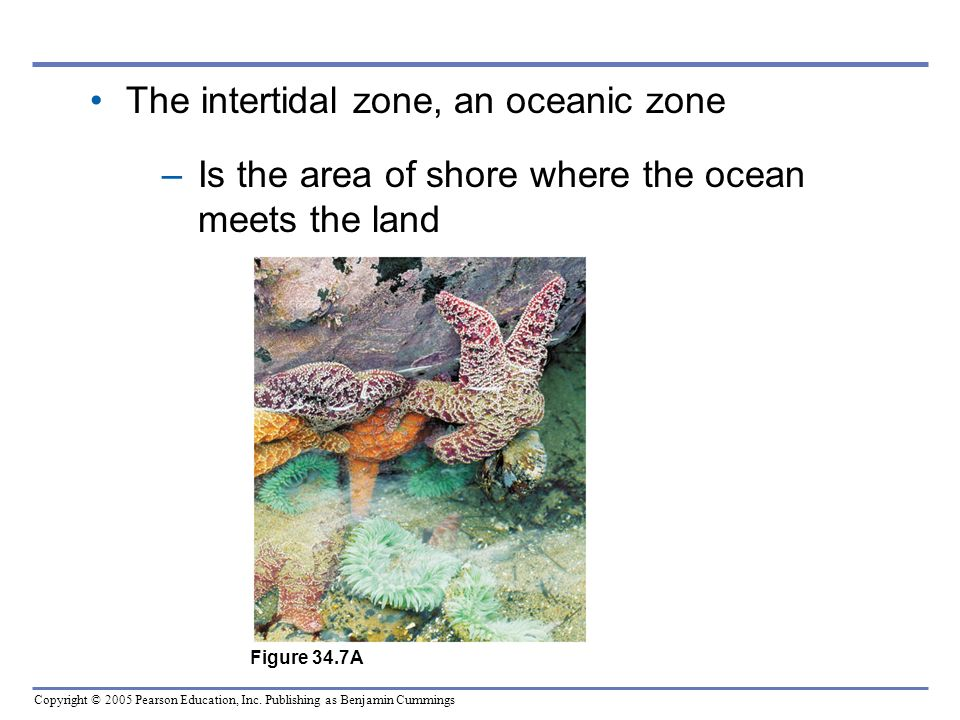 Copyright © 2005 Pearson Education, Inc. Publishing as Benjamin Cummings The intertidal zone, an oceanic zone –Is the area of shore where the ocean me