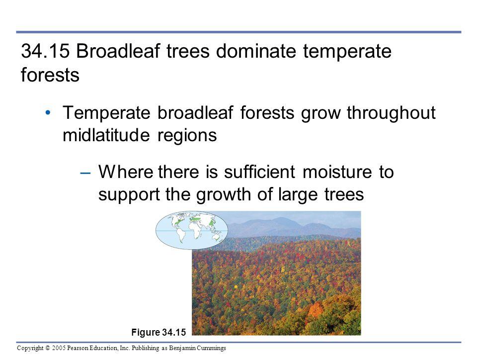 Copyright © 2005 Pearson Education, Inc. Publishing as Benjamin Cummings 34.15 Broadleaf trees dominate temperate forests Temperate broadleaf forests