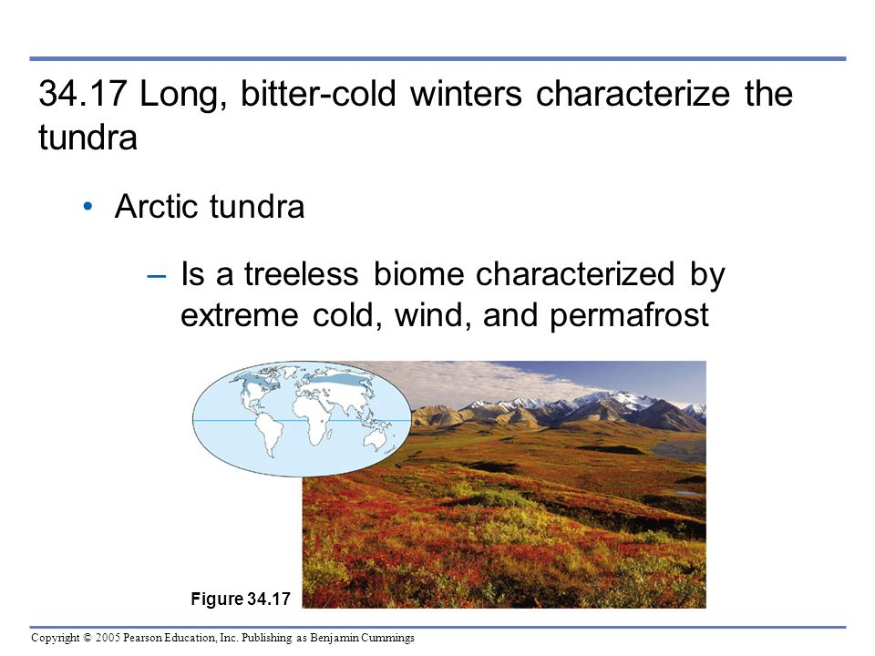 Copyright © 2005 Pearson Education, Inc. Publishing as Benjamin Cummings 34.17 Long, bitter-cold winters characterize the tundra Arctic tundra –Is a t