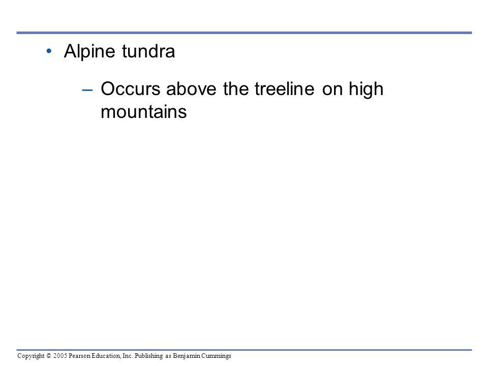 Copyright © 2005 Pearson Education, Inc. Publishing as Benjamin Cummings Alpine tundra –Occurs above the treeline on high mountains