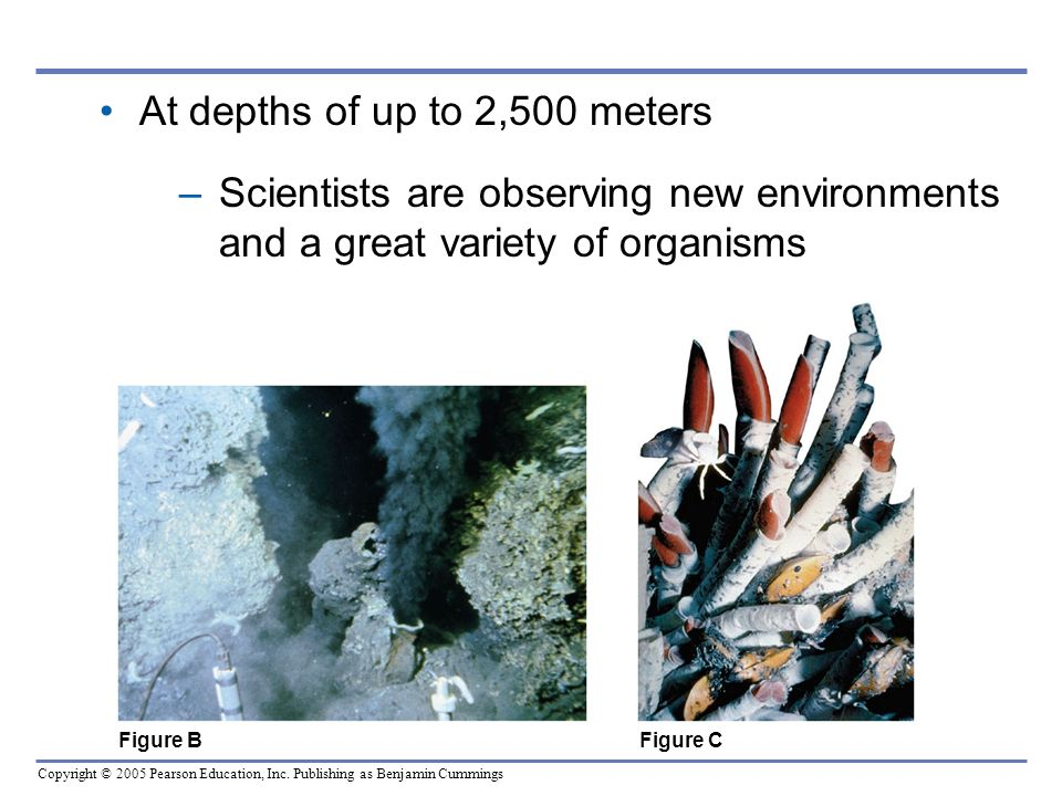 Copyright © 2005 Pearson Education, Inc. Publishing as Benjamin Cummings At depths of up to 2,500 meters –Scientists are observing new environments an