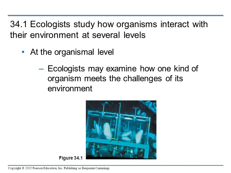 Copyright © 2005 Pearson Education, Inc. Publishing as Benjamin Cummings 34.1 Ecologists study how organisms interact with their environment at severa