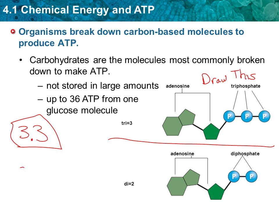 4.1 Chemical Energy and ATP Organisms break down carbon-based molecules to produce ATP. Carbohydrates are the molecules most commonly broken down to m