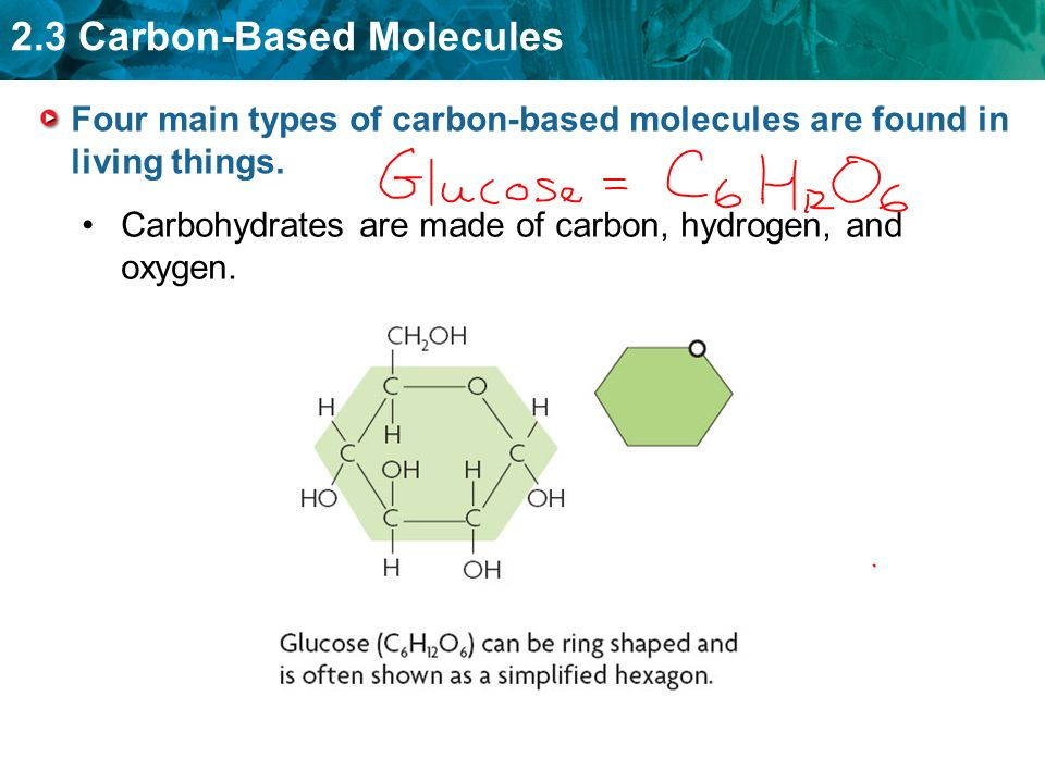 2.3 Carbon-Based Molecules Four main types of carbon-based molecules are found in living things.