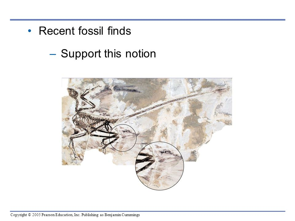 Copyright © 2005 Pearson Education, Inc. Publishing as Benjamin Cummings Recent fossil finds –Support this notion