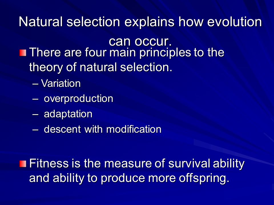 There are four main principles to the theory of natural selection. –Variation – overproduction – adaptation – descent with modification Fitness is the