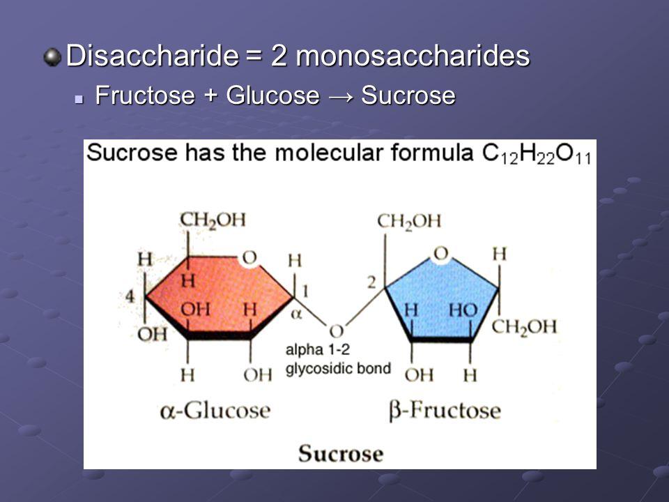 Disaccharide = 2 monosaccharides Fructose + Glucose Sucrose Fructose + Glucose Sucrose