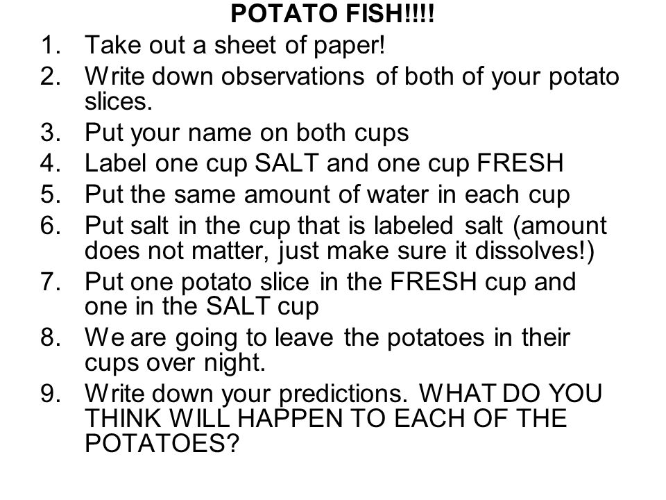 POTATO FISH!!!! 1.Take out a sheet of paper! 2.Write down observations of both of your potato slices. 3.Put your name on both cups 4.Label one cup SAL