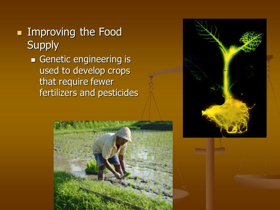 Improving the Food Supply Improving the Food Supply Genetic engineering is used to develop crops that require fewer fertilizers and pesticides Genetic
