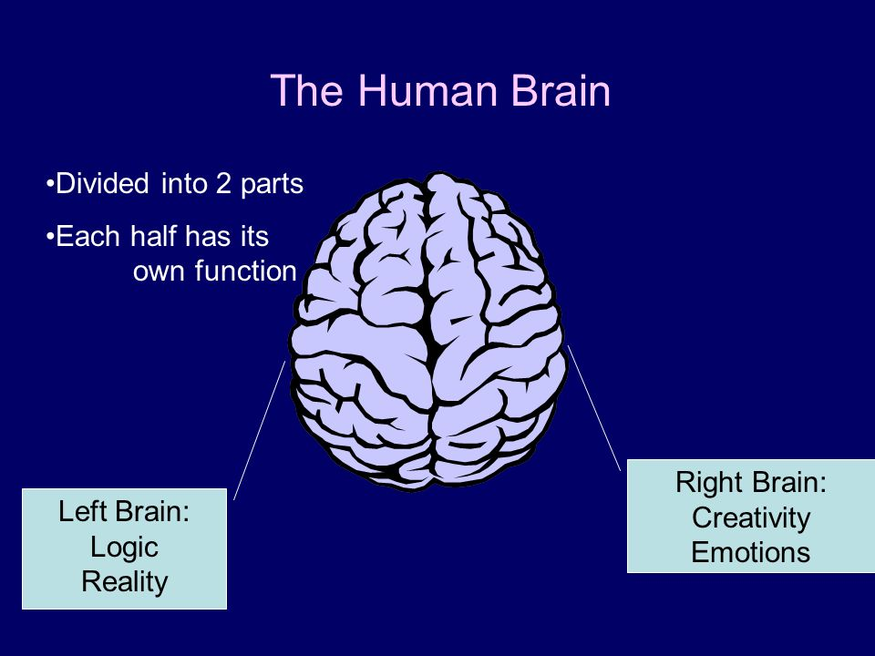 Right Brain: Creativity Emotions Left Brain: Logic Reality The Human Brain Divided into 2 parts Each half has its own function