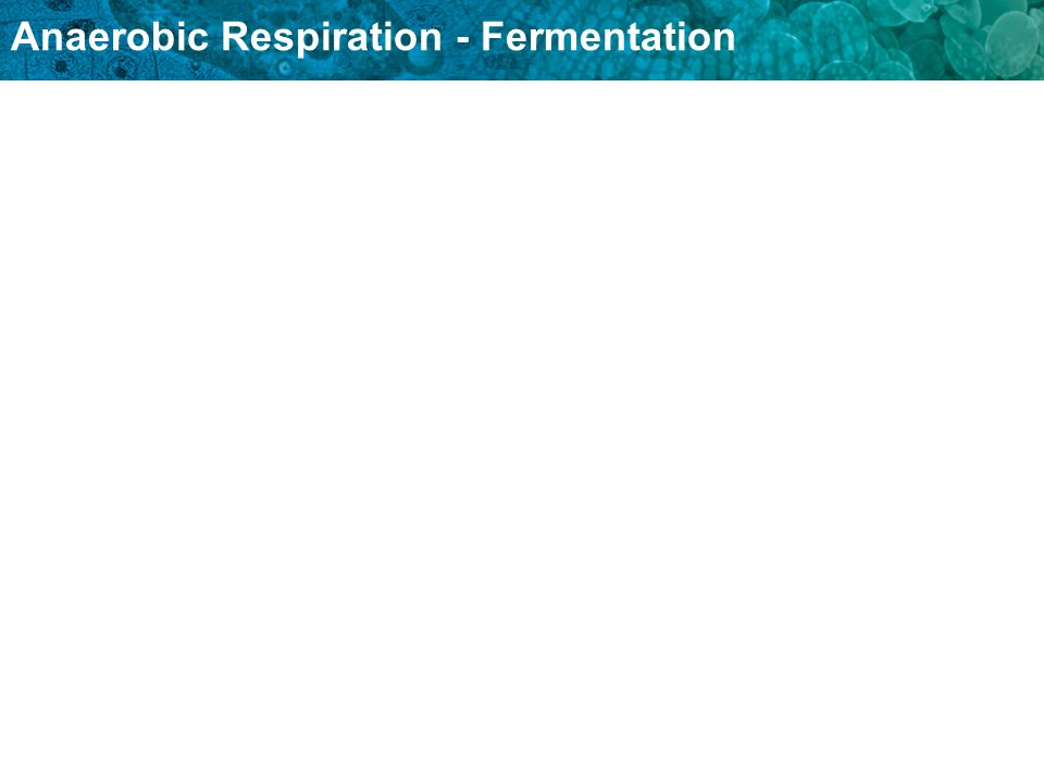 Anaerobic Respiration - Fermentation