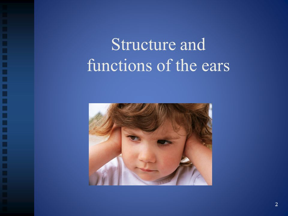 Structure and functions of the ears 2