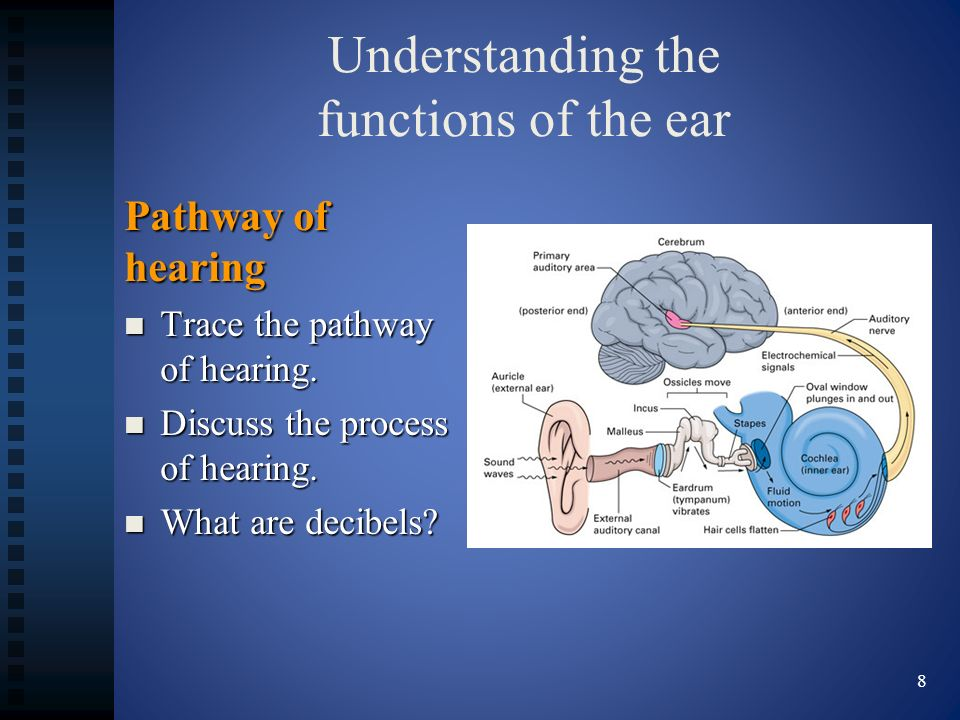 Understanding the functions of the ear Pathway of hearing Trace the pathway of hearing. Trace the pathway of hearing. Discuss the process of hearing.