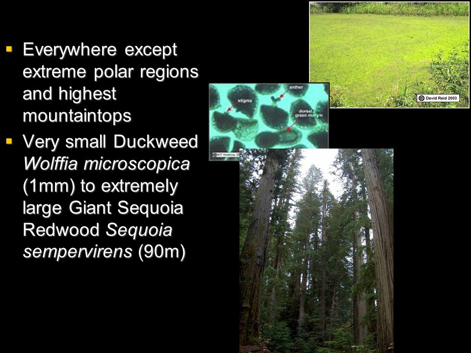 Everywhere except extreme polar regions and highest mountaintops Everywhere except extreme polar regions and highest mountaintops Very small Duckweed