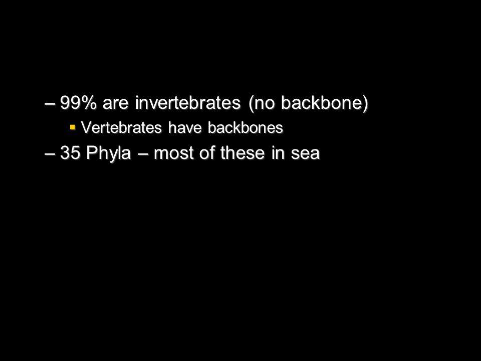 –99% are invertebrates (no backbone) Vertebrates have backbones Vertebrates have backbones –35 Phyla – most of these in sea